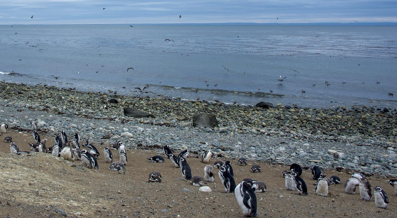 site_pinguinera2m